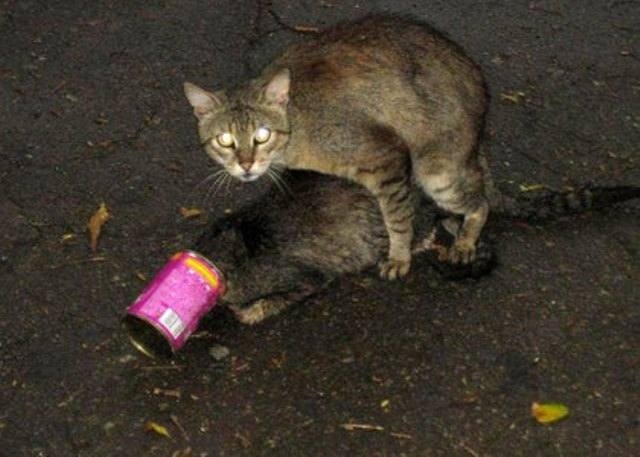 cat_fuk.jpg