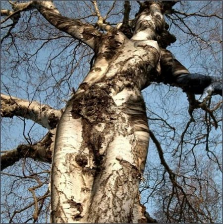 amazing_tree.jpg