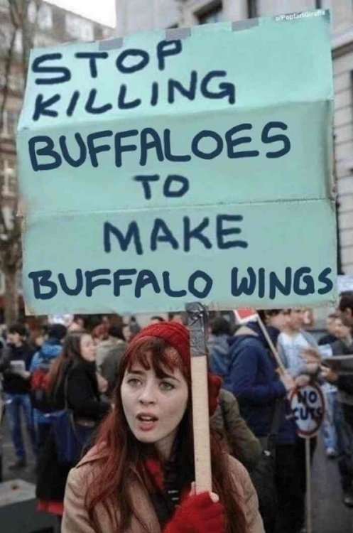 l-31908-stop-killing-buffaloes-to-make-buffalo-wings.jpg