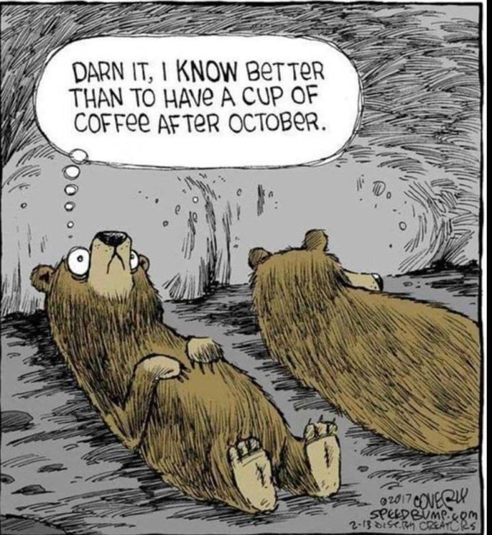 Bear Coffee.jpg