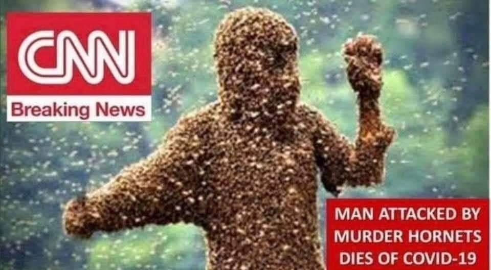 CNN hornets.jpg