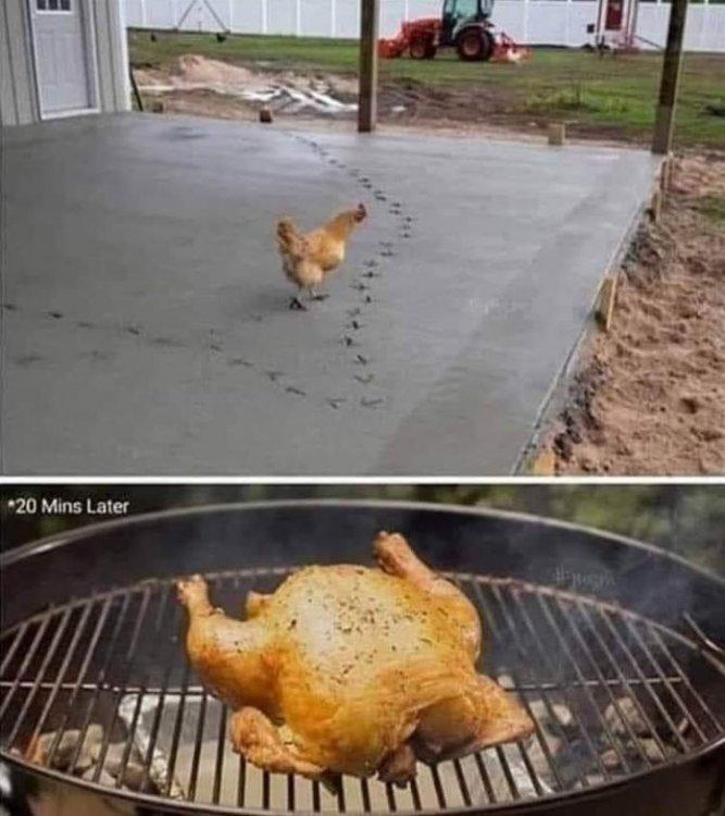 Chicken cement.jpg