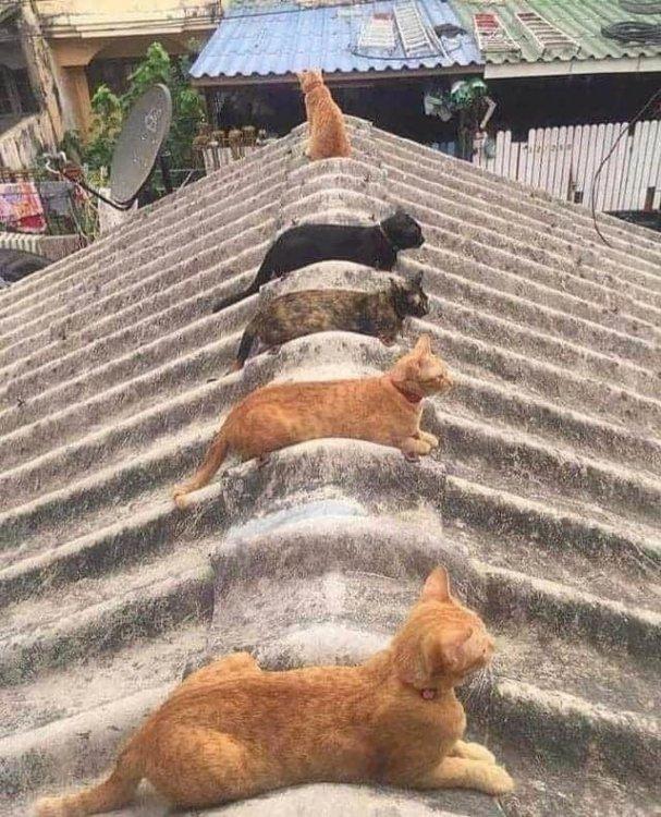 Rooftop Cat Organizer.jpg