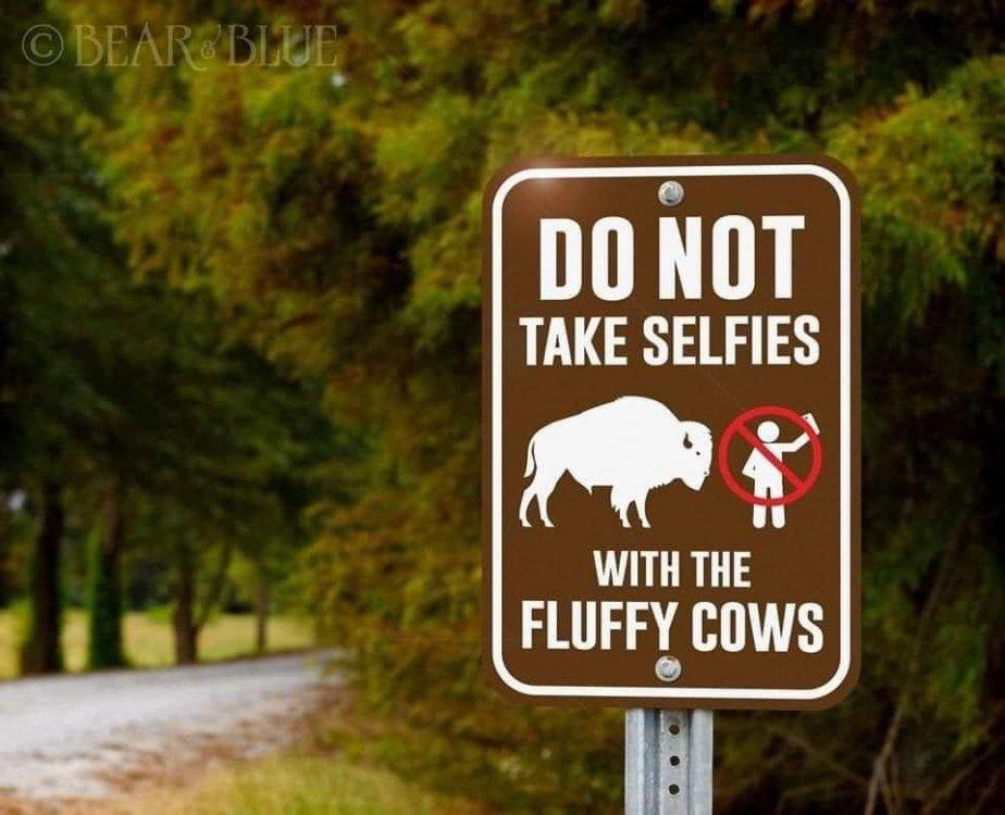 Bison Selfie 1.jpg