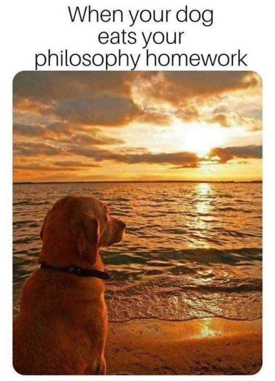 DogHomework.jpg