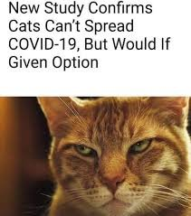catwould.jpg