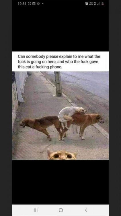 Dogs cat phone.jpg