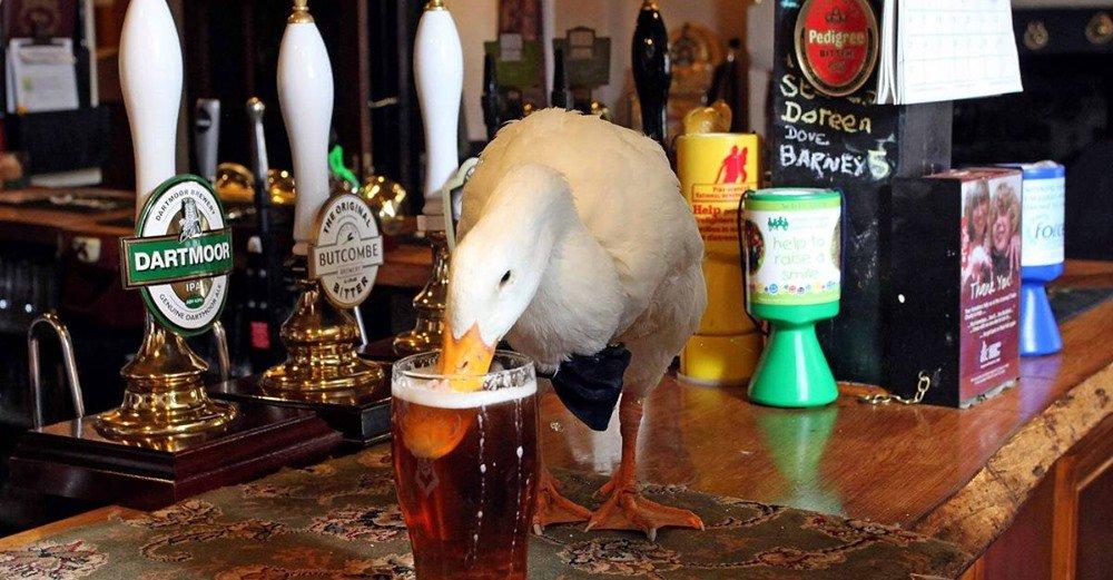 Duck beer.jpg