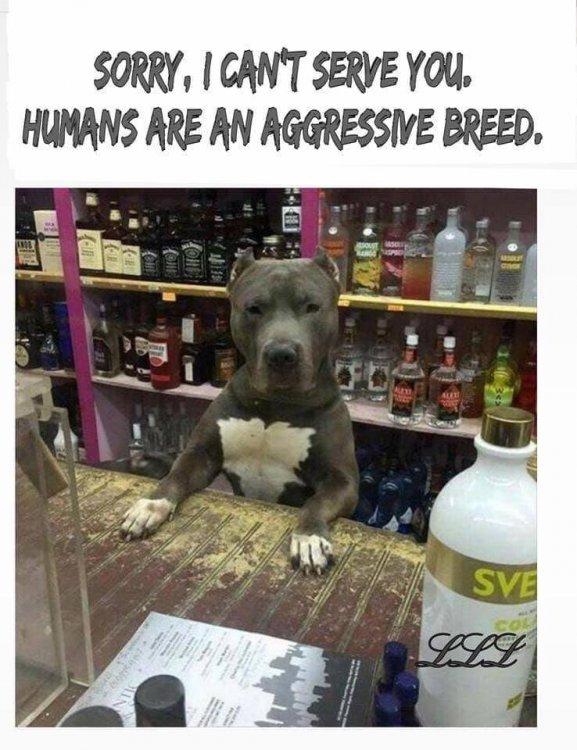 Dog humans agressive.jpg