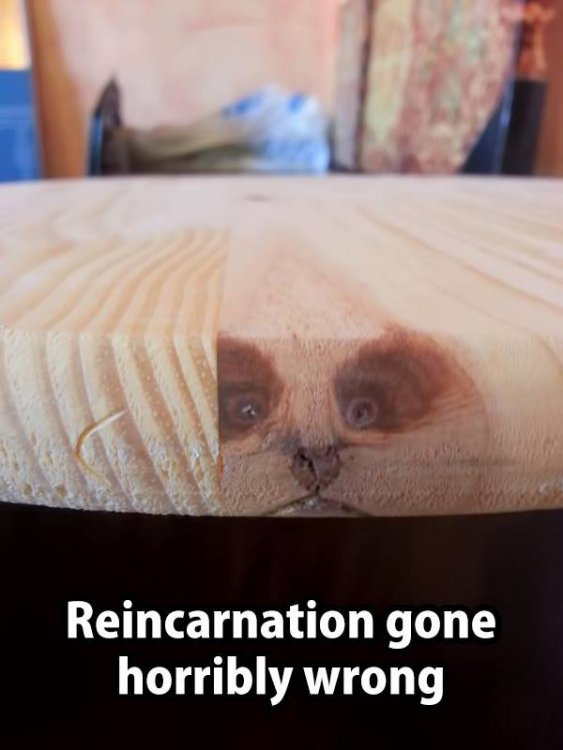 Reincarnation gone wrong.jpg