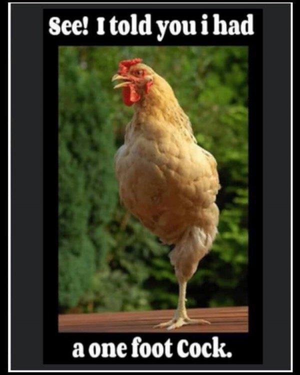 1 ft cock.jpg