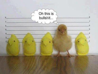 Chick lineup.jpg