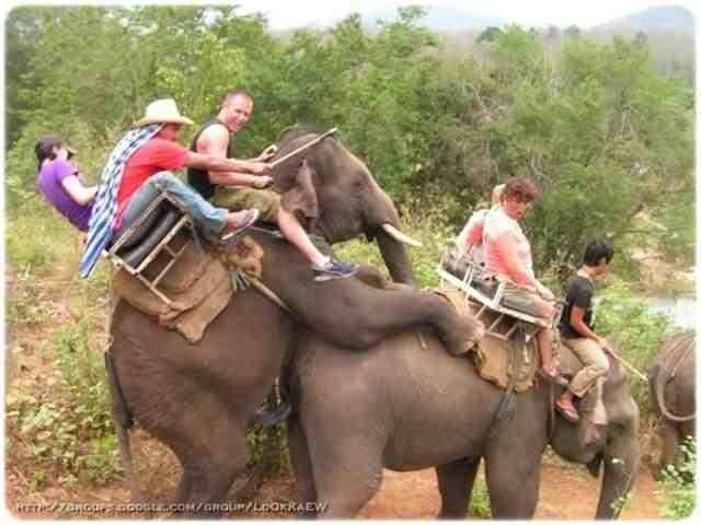 elephants need love.jpg